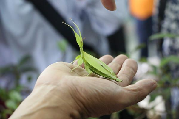 宜蘭住宿 鳳凰宿甲蟲生態民宿 pokemon go大甲藏身處 農村休閒生活就在這