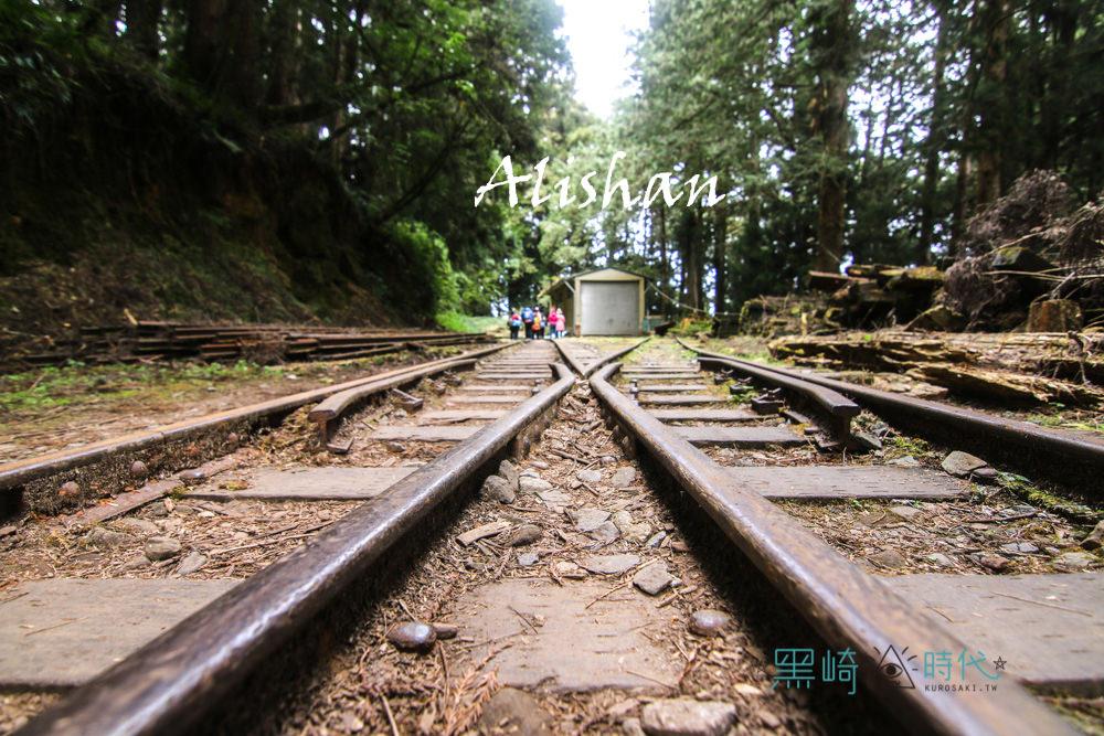 阿里山景點推薦 水山巨木步道散策去