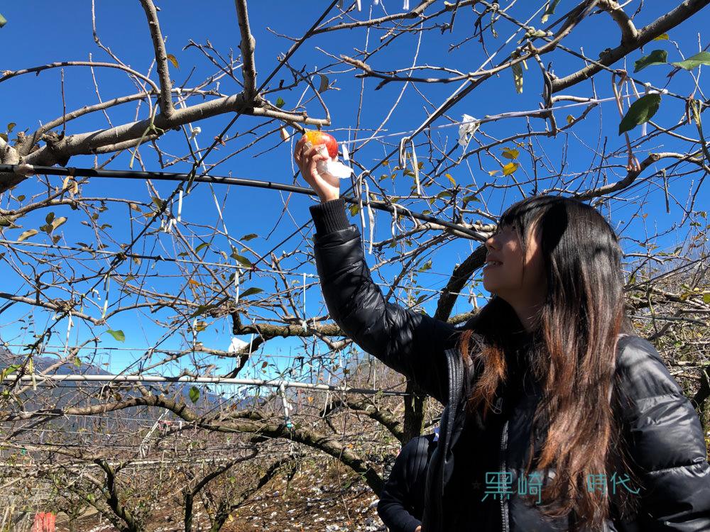 梨山有機蜜蘋果 小農那些蘋果日常 Apple 旗艦店讓我們上山去