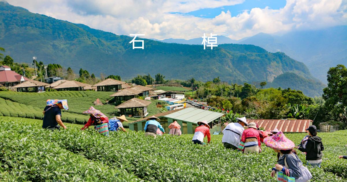 嘉義阿里山採茶趣 採茶製茶品茗那些茶道的大小事