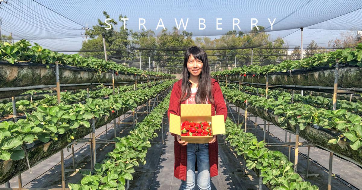 台南景點 到南部採草莓去 美裕草莓園的碩大草莓等你喔!