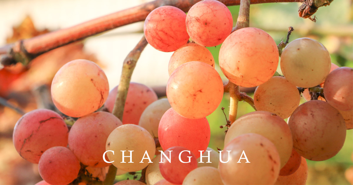 鵬群頂酒莊 近百種葡萄品種,宛如葡萄博物館 彰化二林小旅行