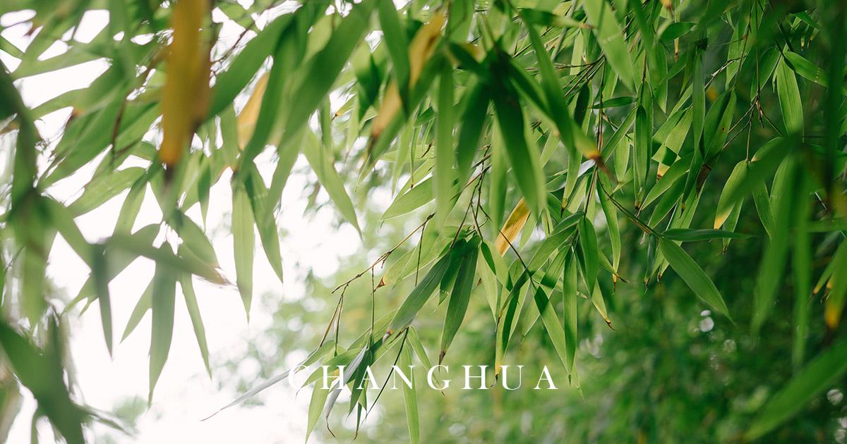 彰化花壇麻竹筍小農 夏季筍子鮮甜的美味